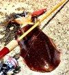 画像7: 林釣漁具製作所 餌木猿 モンキースティッククラシック8.6ft MSC86 (7)